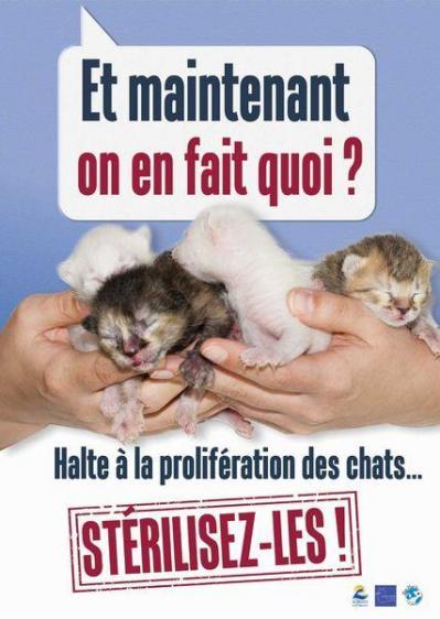 Stérilisation des chats